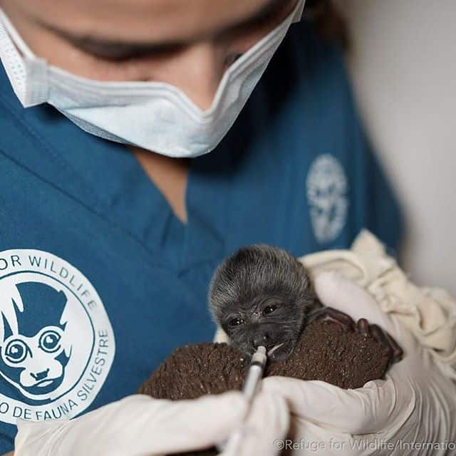 Thumbnail of http://Animal%20treated%20at%20the%20Refuge%20for%20Wildlife
