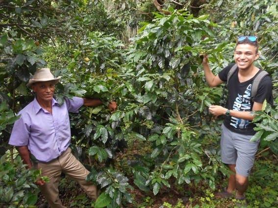 Local coffee farm